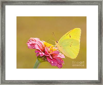 Sunlit Yellow Framed Print