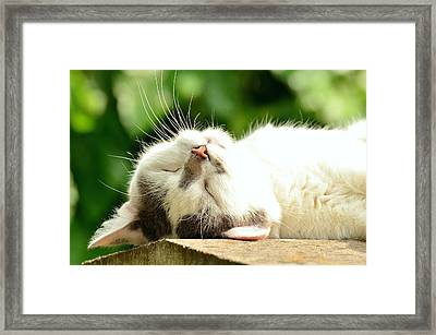 Sunning Cat Framed Print by Cco