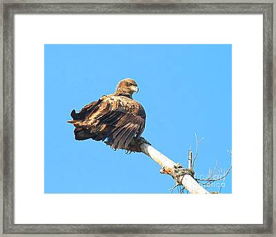 Framed Print featuring the photograph Sunning Out On A Limb by Debbie Stahre