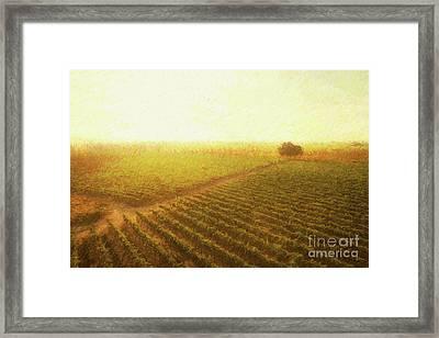 Sunrise Over The Vineyard Framed Print