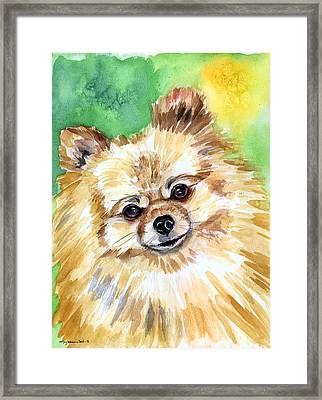 Sunny - Pomeranian Framed Print