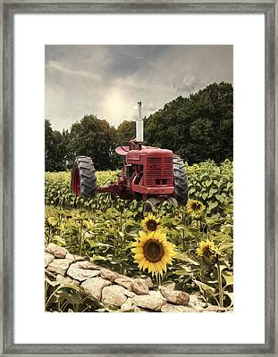 Framed Print featuring the photograph Sunny Acres by Robin-Lee Vieira