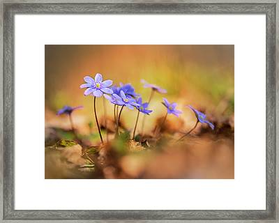 Framed Print featuring the photograph Sunny Afternoon With Liverworts by Jaroslaw Blaminsky