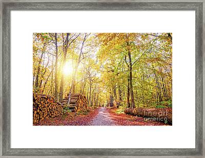 Sunny Autumn Framed Print