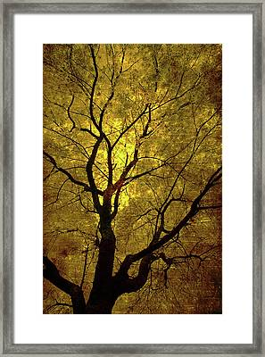 Framed Print featuring the painting Sunny Branches by Gray  Artus