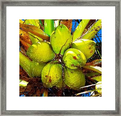 Sunny Coconuts Framed Print