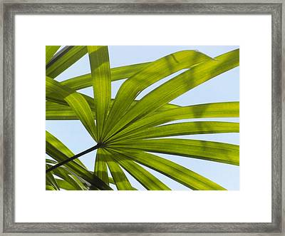 Sunny Day Framed Print by Ian Scholan