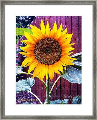 Sunny Day Framed Print by MaryLee Parker