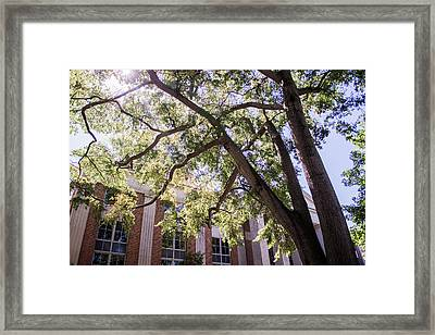 Framed Print featuring the photograph Sunny Days At Uga by Parker Cunningham