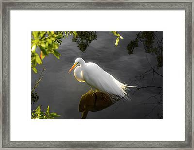 Sunny Egret Framed Print