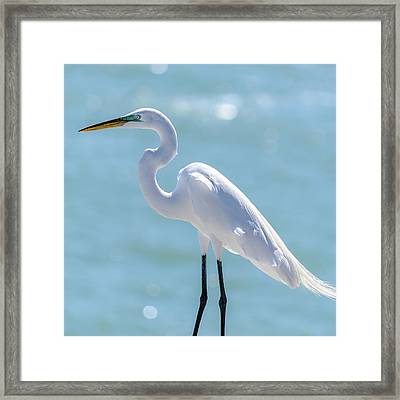 Framed Print featuring the photograph Sunny Egret by Steven Sparks