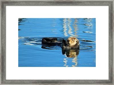 Sunny Faced Sea Otter Framed Print