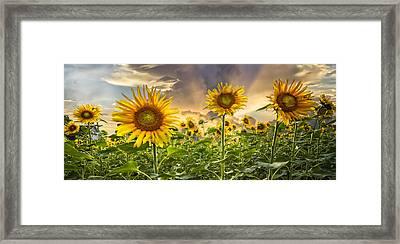Sunny Faces II Framed Print by Debra and Dave Vanderlaan