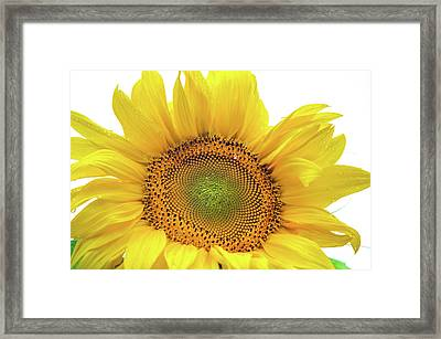 Framed Print featuring the photograph Sunny Flower 1 by Jenny Rainbow