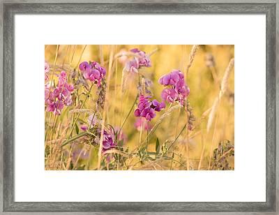 Sunny Garden 1 Framed Print by Bonnie Bruno