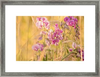 Sunny Garden 3 Framed Print by Bonnie Bruno