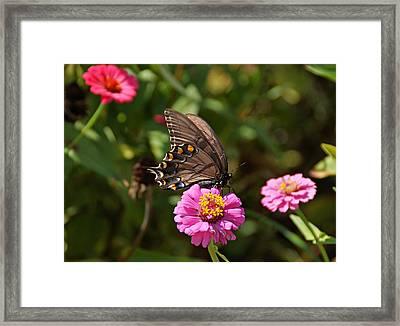 Sunny Garden Framed Print by Sandy Keeton