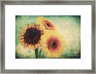 Sunny Gerbera Framed Print by Angela Doelling AD DESIGN Photo and PhotoArt