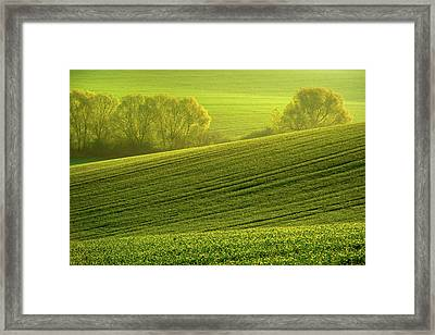 Framed Print featuring the photograph Sunny Green by Jenny Rainbow