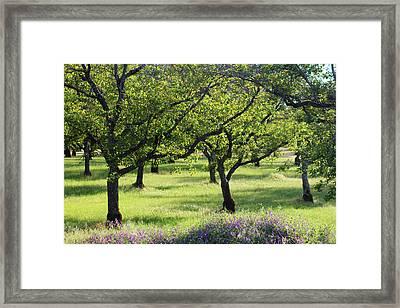 Sunny Grove Framed Print