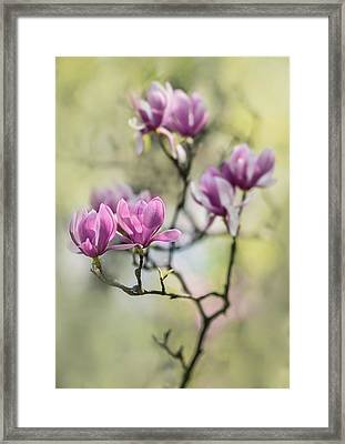 Sunny Impression With Pink Magnolias Framed Print