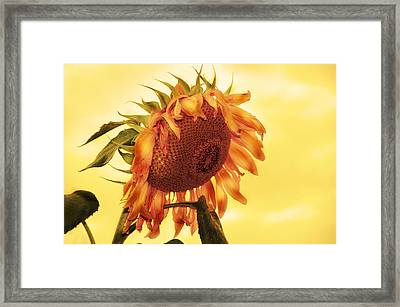Sunny Framed Print