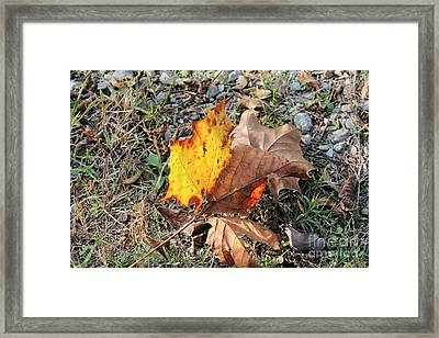 Sunny Leaves Framed Print by Amy Wilkinson
