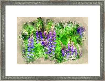 Sunny Lupines Framed Print