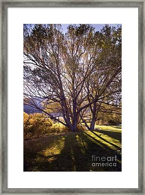 Sunny Mono Tree Framed Print by Norman  Andrus
