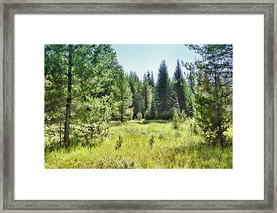 Framed Print featuring the photograph Sunny Mountain Meadow - Landscape Photograph by Ann Powell