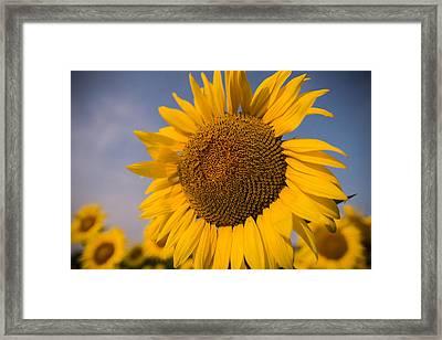 Sunny Nights Framed Print