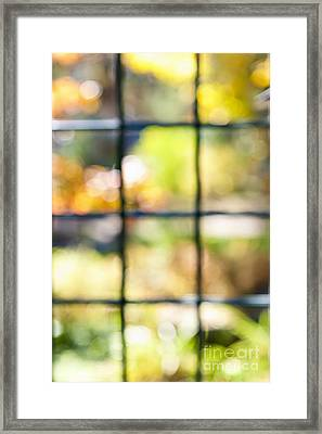 Sunny Outside Framed Print by Elena Elisseeva