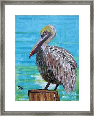 Sunny Pelican Day Framed Print