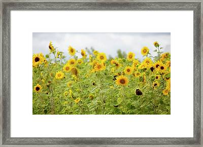 Sunny Roadside Framed Print by Rebecca Cozart