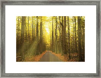 Sunny Roaring Fork Road Framed Print