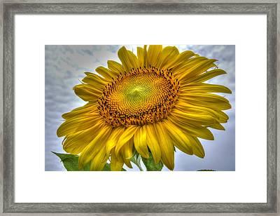 Sunny Side Up Framed Print by Charlotte Schafer
