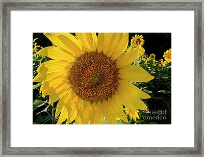 Framed Print featuring the photograph Sunny Side Up by Chris Scroggins