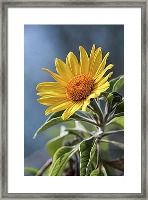 Framed Print featuring the photograph Sunny Side Up  by Saija Lehtonen