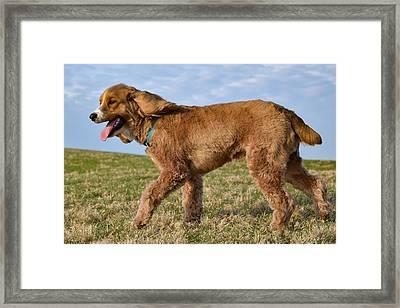 Sunny Stroll Framed Print