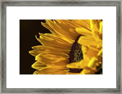 Framed Print featuring the photograph Sunny Too By Mike-hope by Michael Hope