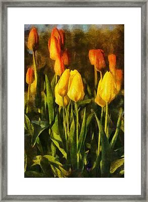 Sunny Tulips Framed Print