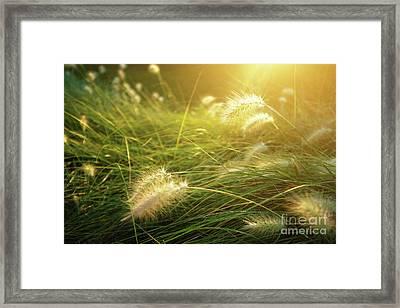 Sunny Vegetation Framed Print