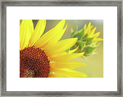 Framed Print featuring the photograph Sunny Yellow Sunflower by Jennie Marie Schell