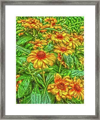 Sunnyday Framed Print