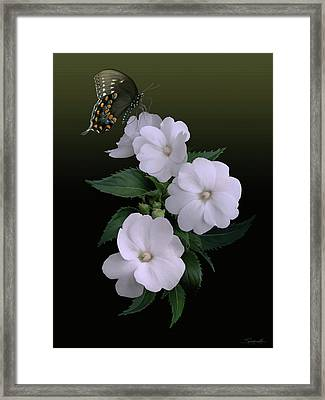 Sunpatiens And Swallowtail Butterfly Framed Print by Spadecaller