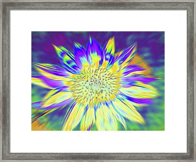 Sunpopped Framed Print