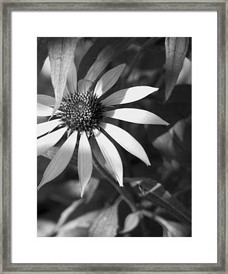 Framed Print featuring the photograph Sunrays by David Dunham