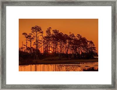 Sunrise Along A Tree Line Framed Print
