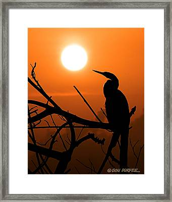 Framed Print featuring the photograph Sunrise Anhinga by Don Durfee