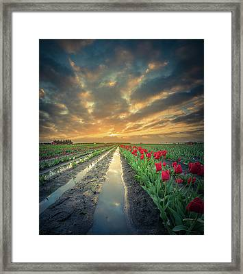 Framed Print featuring the photograph Sunrise At Tulip Filed After A Storm by William Lee